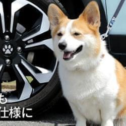 這些套件Honda愛狗人士必須擁有