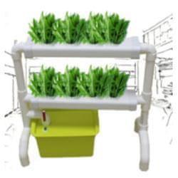 在家種菜風潮你跟上了嗎?